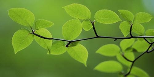 видеть во сне зеленую веточку
