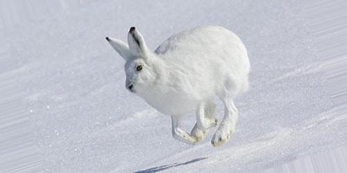 видеть во сне белого зайца
