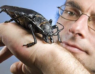 Большой жук