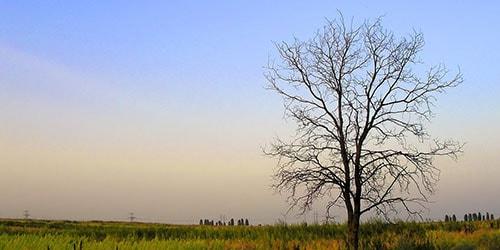 видеть во сне дерево без листьев