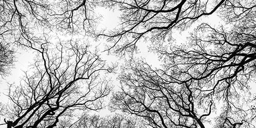 лысые деревья