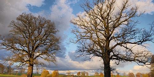 к чему снится дерево без листьев