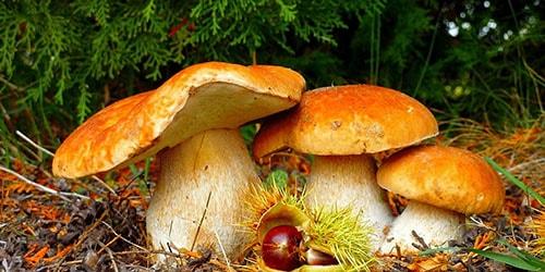искать грибы в лесу