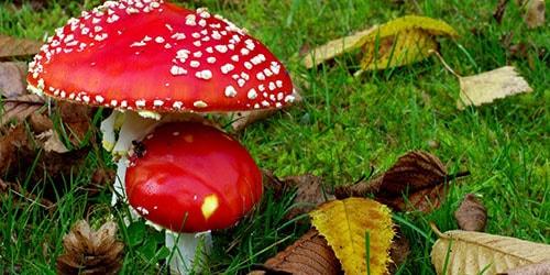 к чему снятся ядовитые грибы в лесу