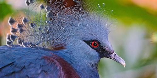 Сонник клюнула птица к чему снится клюнула птица во сне