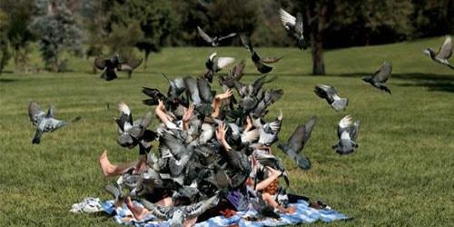 нападение птичьей стаи