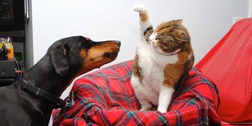 к чему снится что кошки дерутся