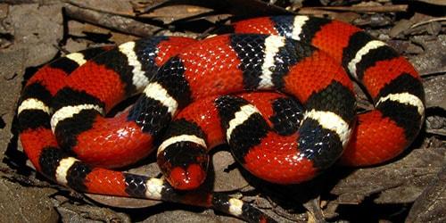 к чему снится что укусила красная змея