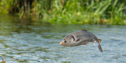 рыба выпрыгнула из воды