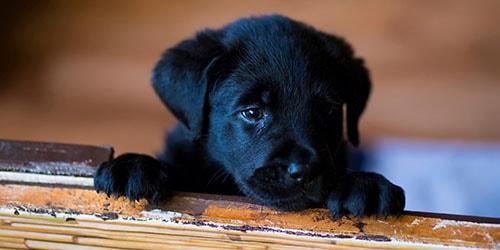 видеть во сне маленькую собачку