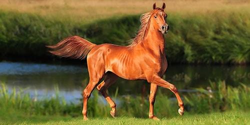 видеть во сне рыжего коня