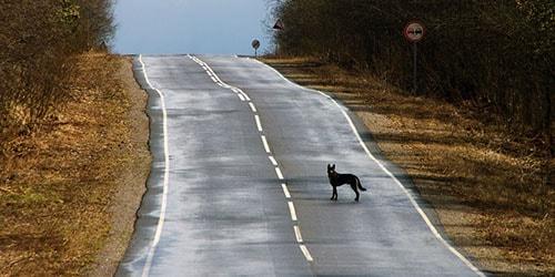к чему снится что собаку сбила машина