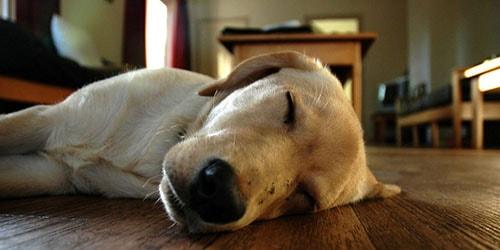 видеть во сне труп собаки