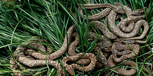 видеть во сне много змей под ногами