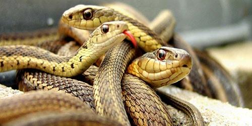 к чему снятся змеи под ногами