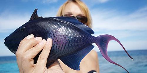 экзотическая рыбка