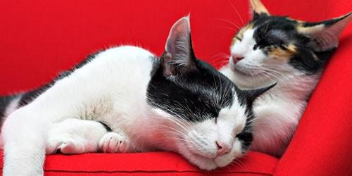 к чему снятся дохлые кошки