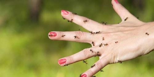 кусают муравьи во сне