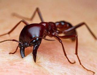 Кусают муравьи