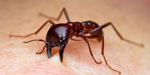 к чему снится что кусают муравьи