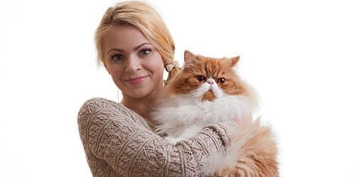 держать кота