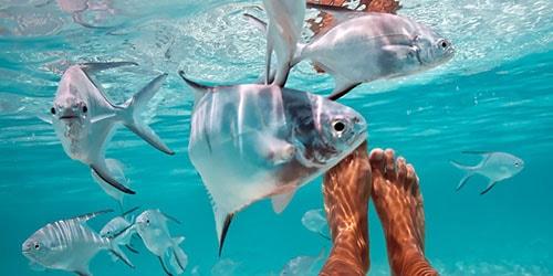 много рыб