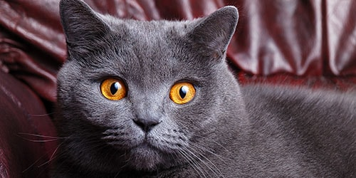 видеть во сне серого кота
