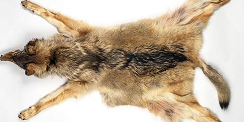 к чему снится снимать шкуру с животного