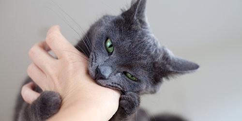 к чему снится укус кошки в руку