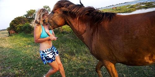 напала лошадь