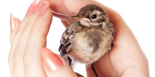 видеть во сне маленькую птичку