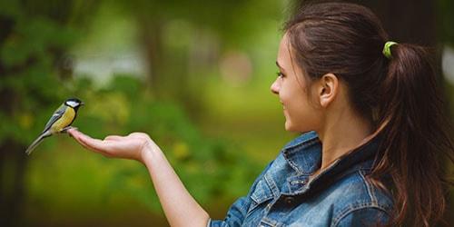 к чему снится маленькая птичка в руках