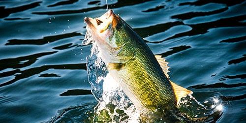 к чему снится рыбачить