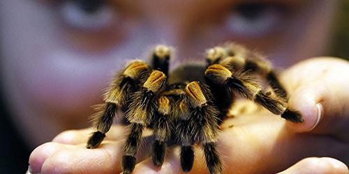убить большого паука во сне