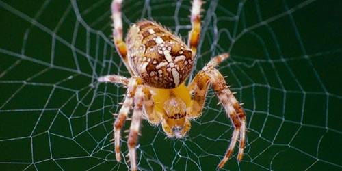 к чему снится убить большого паука