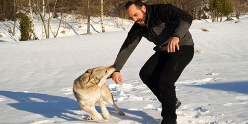 к чему снится что волк кусает за руку