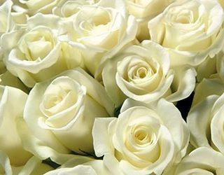К чему снится букет белых роз?