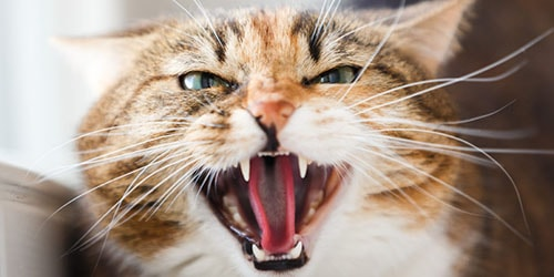 кот укусил во сне