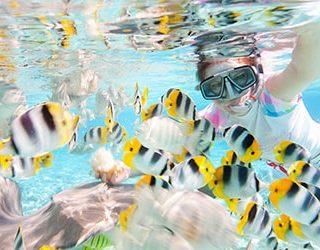 Плавать с рыбами