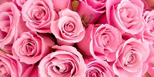 видеть во сне розовые розы