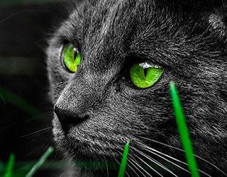 Сонник зеленые глаза