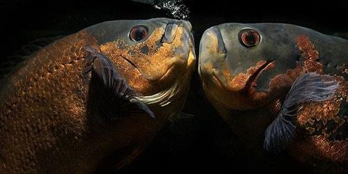 большие рыбы