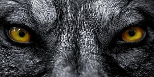 взгляд хищника