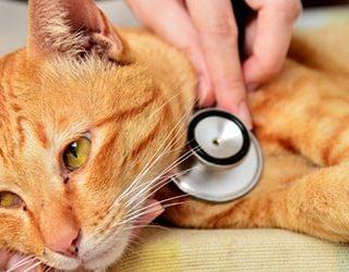 К чему снится больной кот?