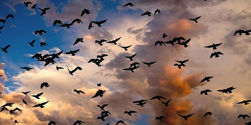много птиц в небе