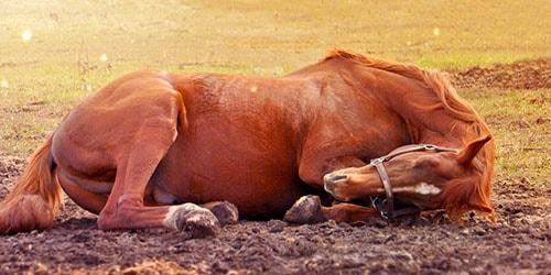 дохлая лошадь