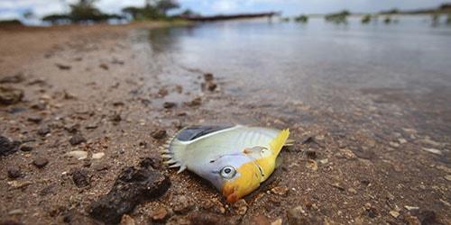 рыба на берегу