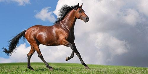 коричневый конь