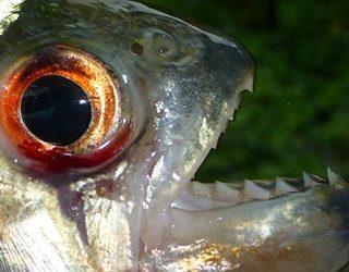 Кусает рыба