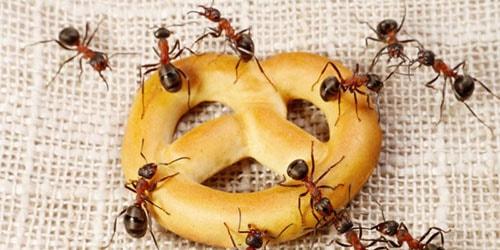 насекомые на кухне